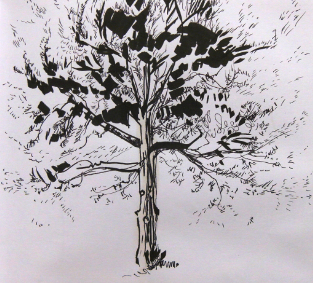 ink drawing of pine tree
