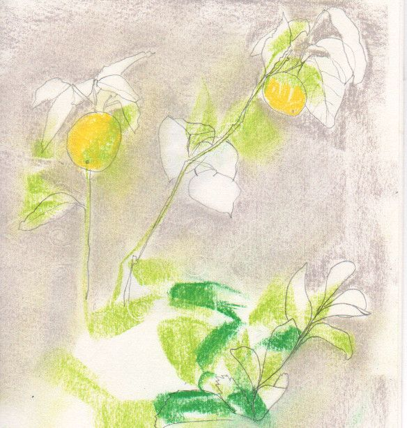 chalk and graphite drawing of lemon tree
