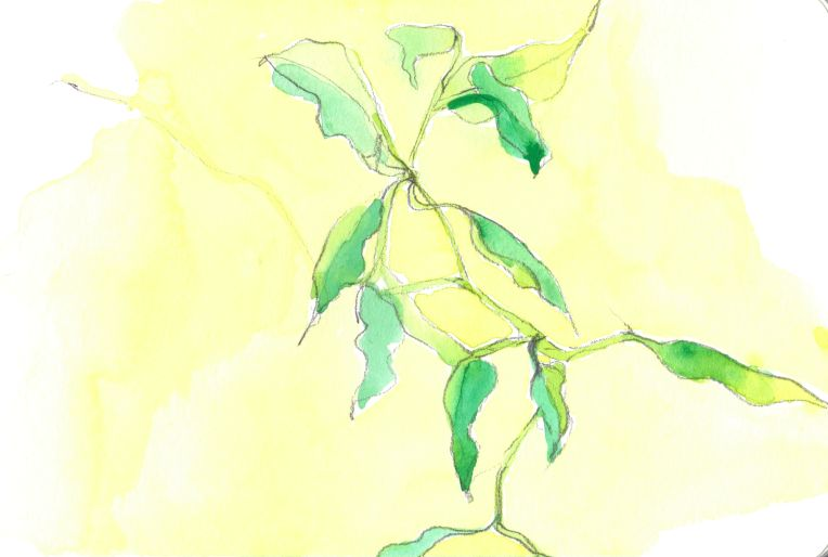 watercolour sketch of leaves on yellow background