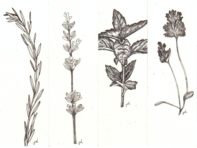"Four Herb Bookmarks: rosemary, lavender, basil and cilantro, 2 x 6"" each, pen and ink on natural-tone (cream) paper"