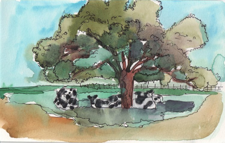watercolour and ink painting of cows sleeping in shade of tree