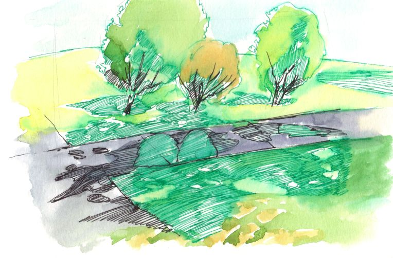 ink and watercolour drawing of trees on ENMU campus