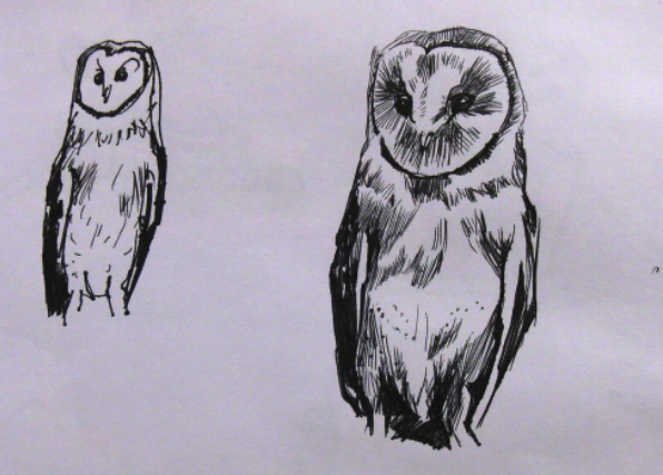 drawing of owls
