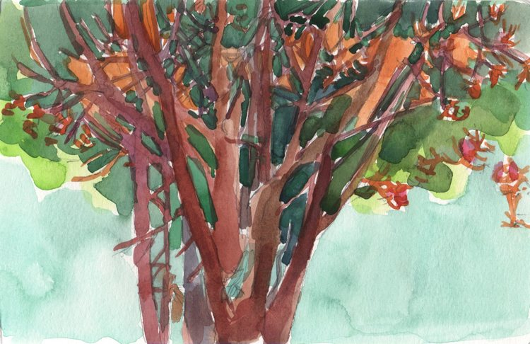 watercolour painting of a pine tree