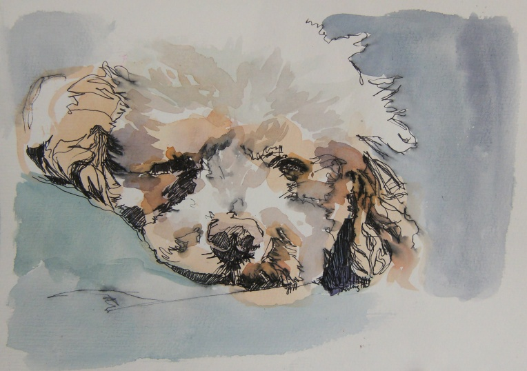 pen and watercolour painting of sleeping poodle