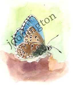 Blue Butterfly, watercolor and ink on paper, 4 x 4""