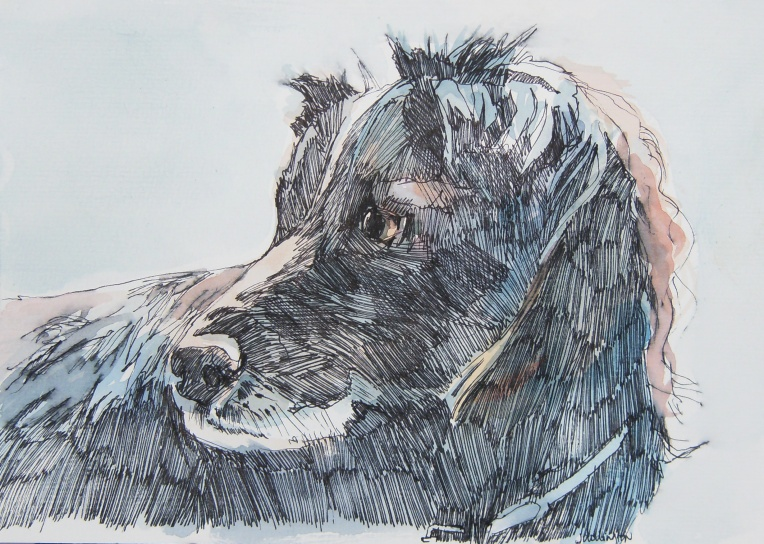 Pen and watercolour painting of dog