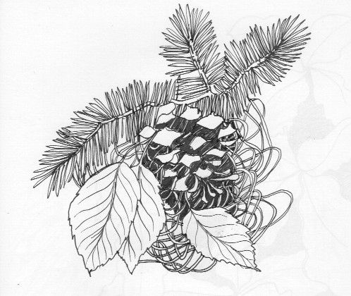 ink drawing of pine cone