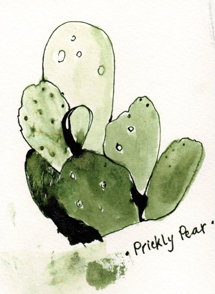 ink drawing of prickly pear cactus