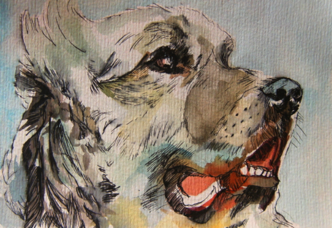 watercolour painting of dog