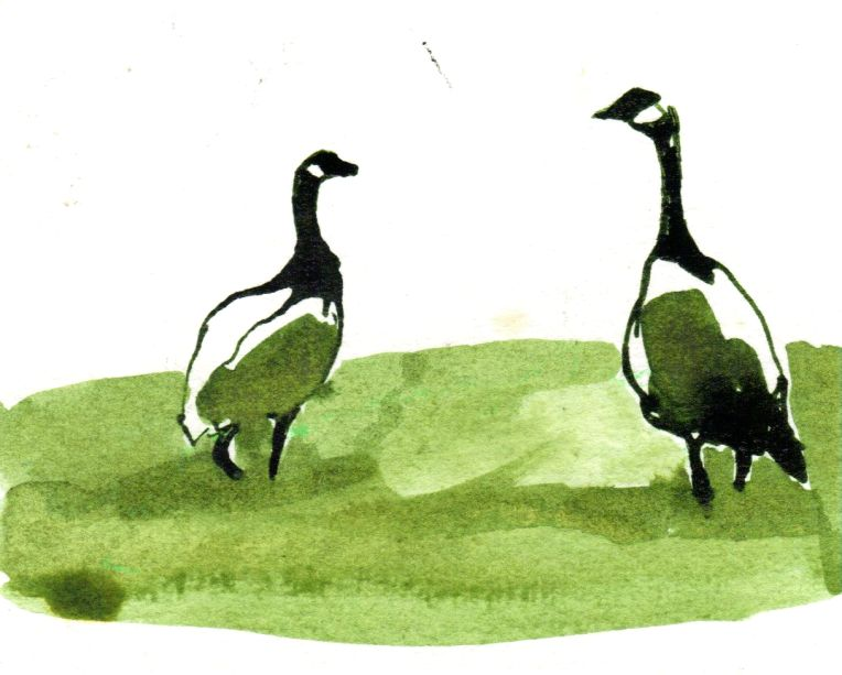ink drawing of geese