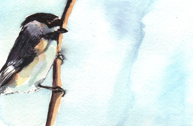 watercolour of a chickadee bird
