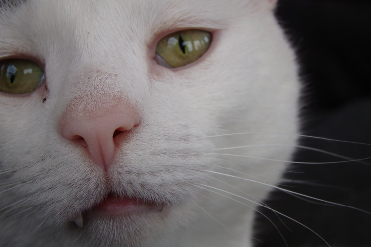 photograph of cat face